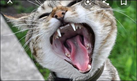 Dans la préhistoire le chat était...