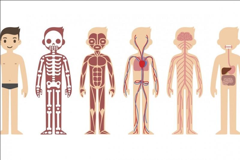 Sur quelle partie du corps apparaît le losange de Michaelis ?