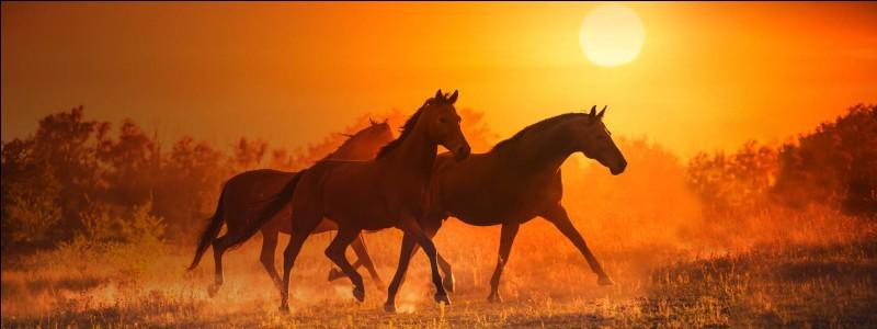 Quelle robe n'existe pas chez les chevaux ?