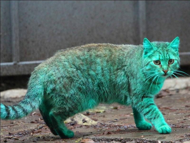 Quelle est la couleur possible d'un chat ?