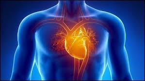 SVT - Dans le coeur humain, laquelle de ces valves n'existe pas ?