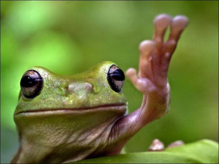 Trouvée sur le site minas ambiente blogspot.com, on aurait l'impression qu'elle nous salue.Quel est le nom de cet amphibien ?