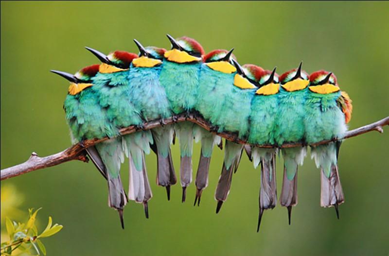 José Luis Rodríguez est l'un des photographes espagnols les plus reconnus depuis 30 ans. Cette photo est l'une de ses favorites, il lui a donné le nom de : ''Bird Caterpillar''. Il veut montrer la nature et la vie, autrement.Quel est le nom de ce bel oiseau ?