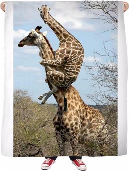 Pour vous faire sourire une dernière fois. Ce duo est particulier et Google explique que la petite a peur. Quel est le nom de ce mammifère au long cou ?Merci de protéger les animaux.