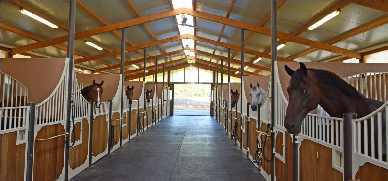 Bâtiment : Comment appelle-t-on l'endroit où les chevaux vivent lorsqu'ils sont en intérieur ?