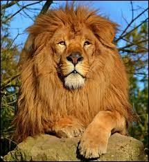 Combien de races de lions y a-t-il en France ?