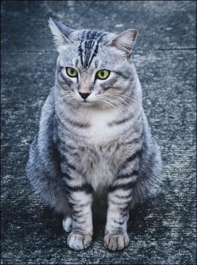 Combien de races de chats existe-t-il en France ?