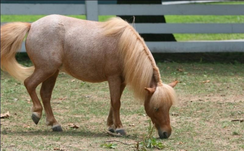 Ce cheval est dit ... ou ...