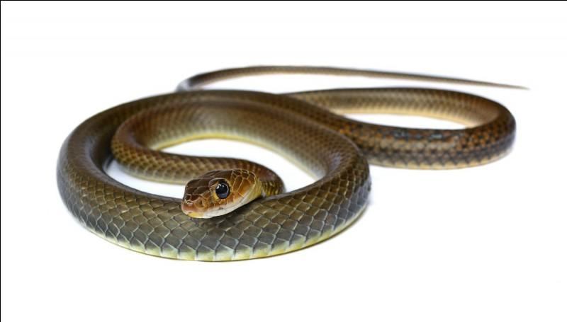 Quel est le serpent le plus rapide ?