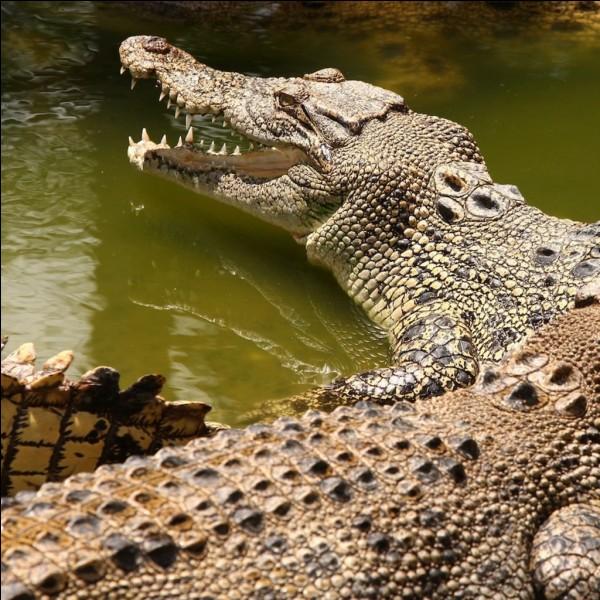 Combien de temps, le crocodile peut-il rester sans manger ?