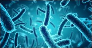 La bactérie responsable du botulisme se nomme...