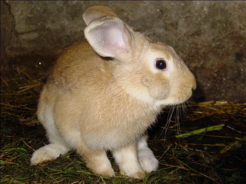 Par quel mot désigne-t-on l'élevage des lapins ?