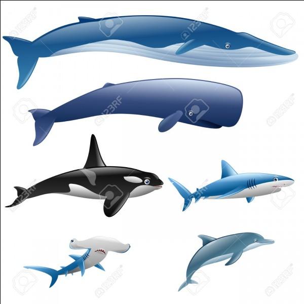Comment appelle-t-on la nageoire sur le dos des poissons, de quelques baleines et des dauphins ?
