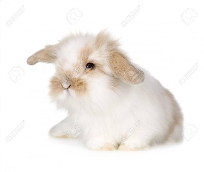 Comment s'appelle le petit du lapin ?
