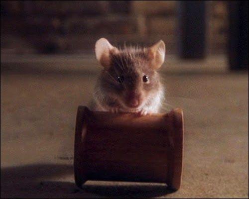Un film de 1999, basé sur une histoire de Stephen King, avec Tom Hanks, dans lequel l'animal se nomme Mister Jingle. Quel est ce film ?