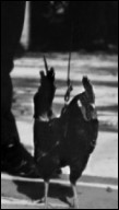 Un film de 1963 avec Louis de Funès dans lequel l'animal est une poule. Quel est ce film ?