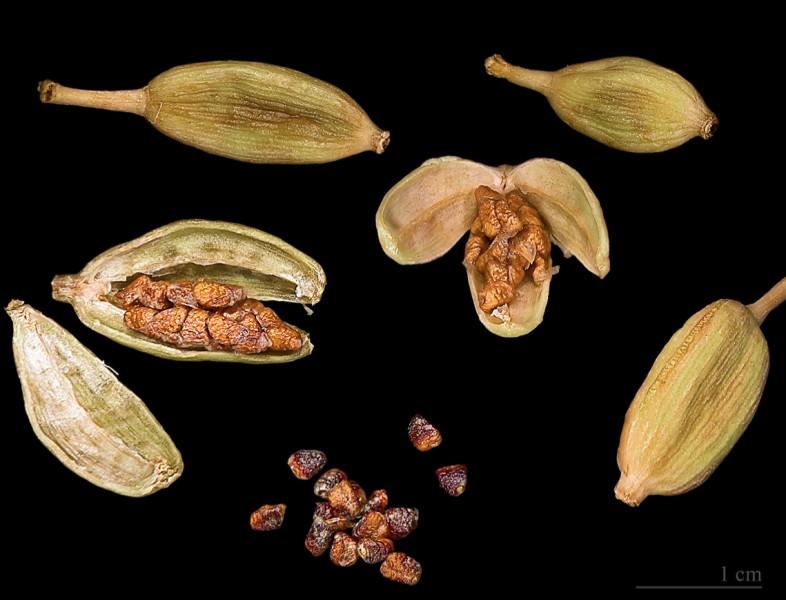 Quel est le nom de cette épice provenant des graines de la capsule d'un fruit d'une plante herbacée ?