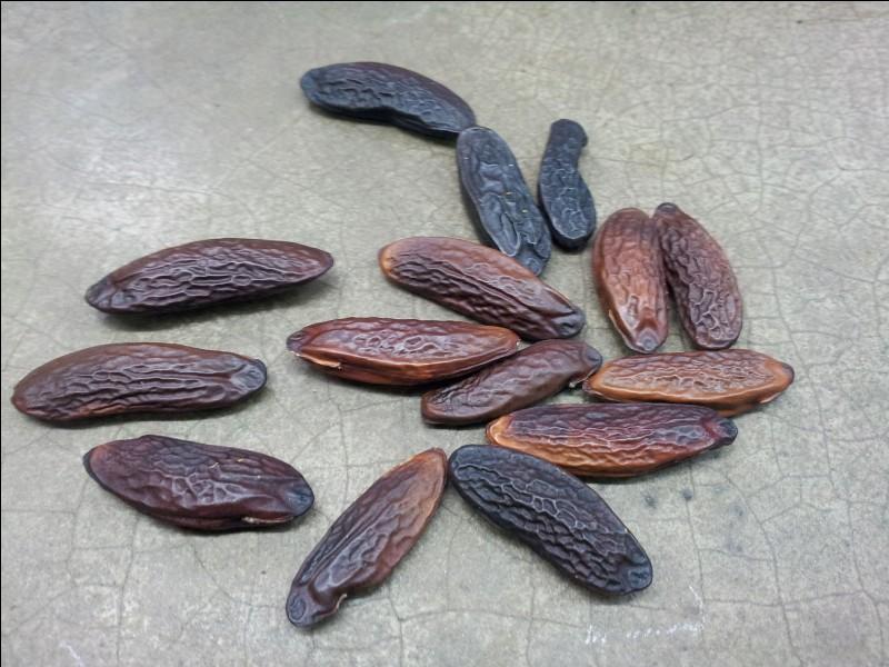 Quel est le nom de cette épice provenant d'une graine contenue dans le noyau du fruit d'un arbre tropical ?