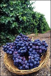 Faite de raisins, une boisson alcoolisée...