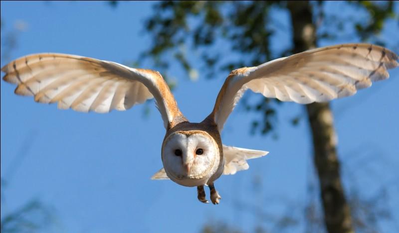 Quel oiseau possède deux orteils au pied ?