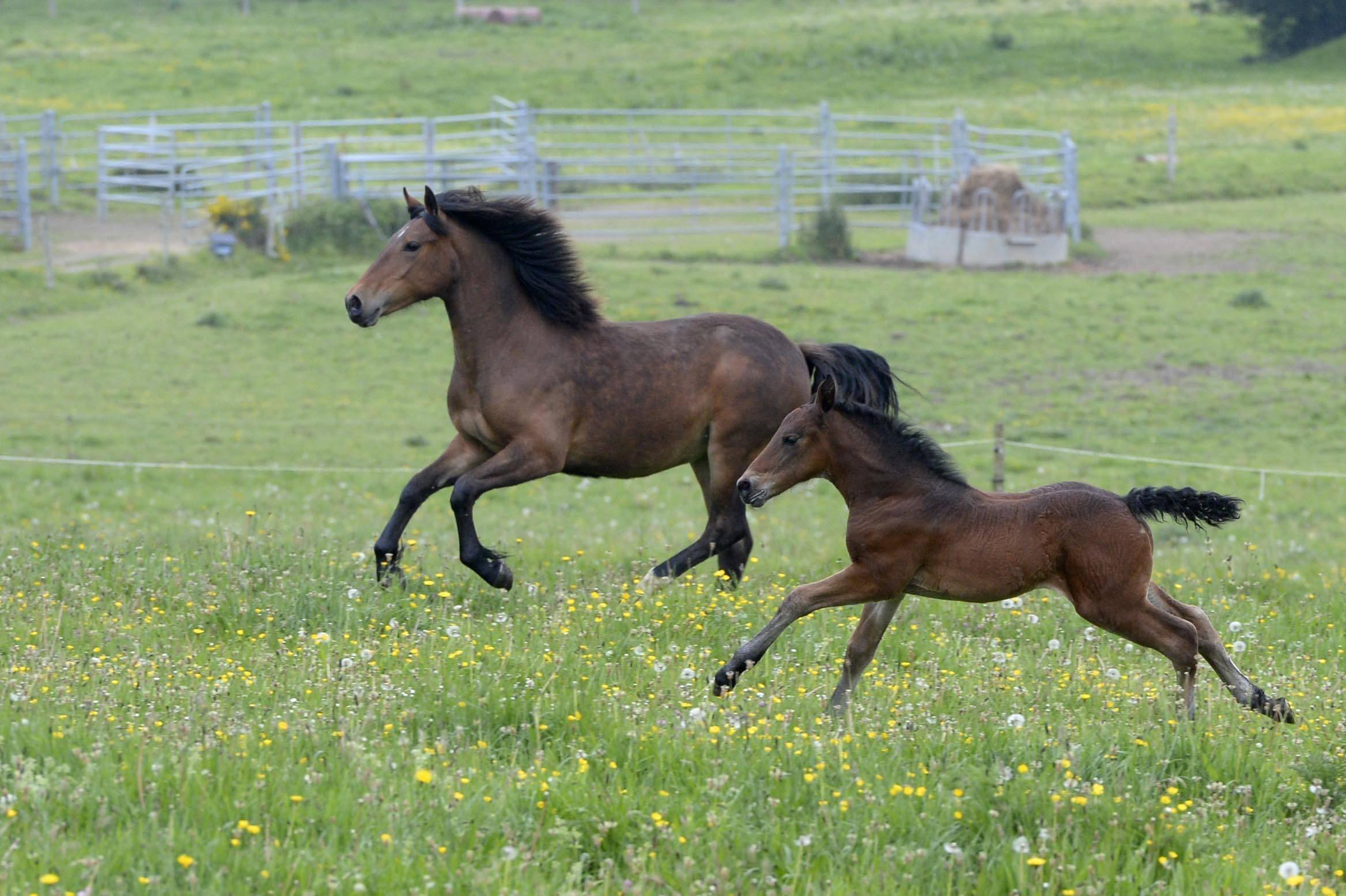 Les chevaux/l'équitation