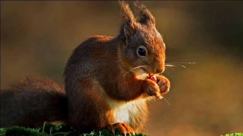 De quoi se nourrit l'écureuil ?