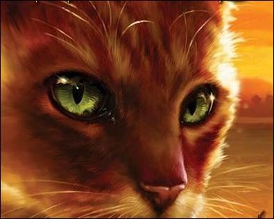 Quand Étoile de Feu (chaton) arrive dans le camp du Tonnerre, contre qui se bat-il ?