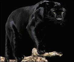 La panthère noire est la mascotte de la marque Dulux Valentine.
