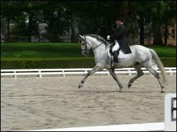 En équitation, c'est une allure.