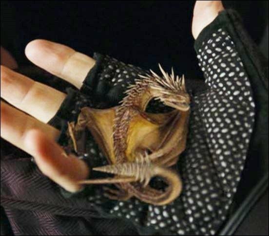 Le/la 4e élu(e) du Tournoi a pioché et quelle est la race du dragon dans laquelle il/elle a pioché ?