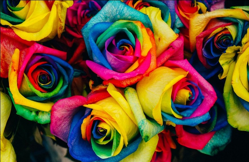 Parmi ces couleurs, celle que tu préfères est...