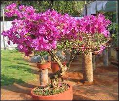 Comment orthographie-t-on le nom de cet arbuste ?