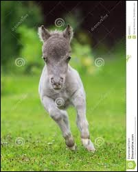 Ceci est un poney.