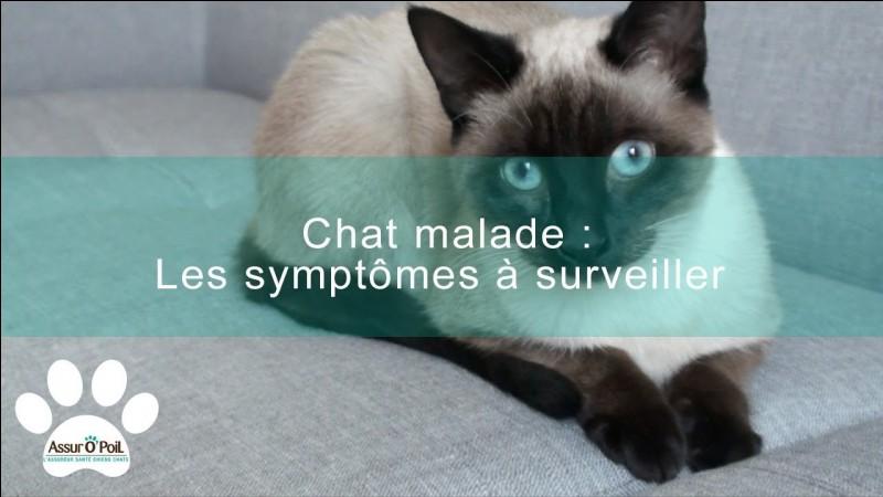 Quels sont les symptômes quand le chat ne va pas bien ?
