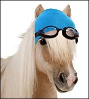 Lequel de ces sports équestres n'existe pas ?