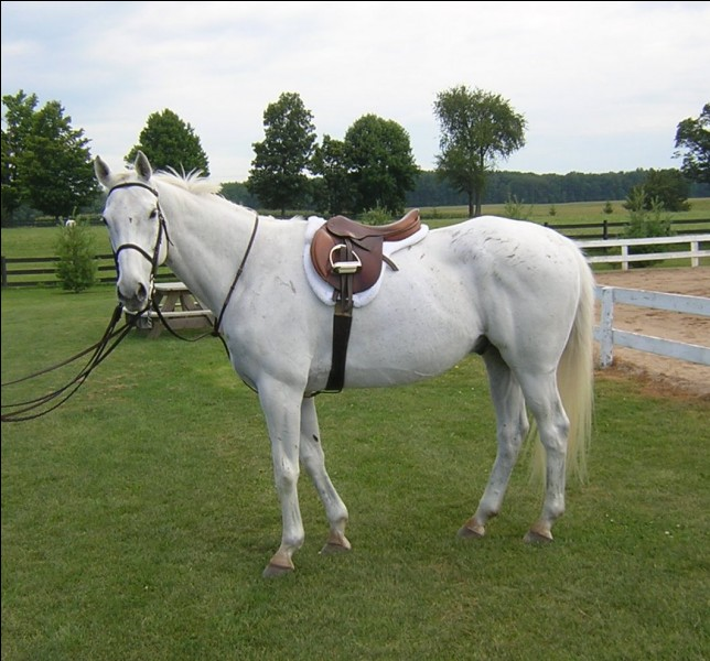 Pour seller un cheval il faut d'abord...