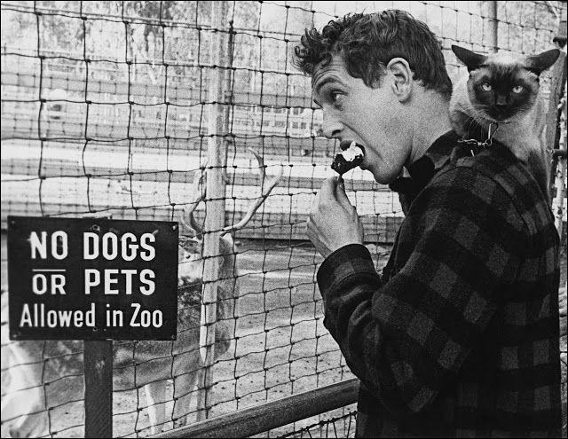 Ce célèbre acteur américain déguste sa crème glacée en compagnie de son chat siamois (1956).Indices : acteur né en 1925 - films notables : L'arnaque - La Chatte sur un toit brûlant - Butch Cassidy et le Kid
