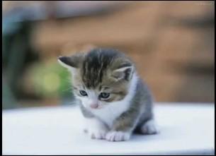 Combien de temps les chats peuvent-ils vivre ?