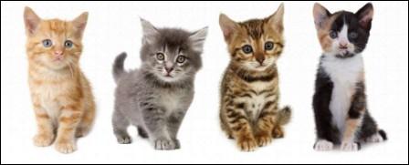 Combien de chatons la chatte peut-elle avoir par portée ?
