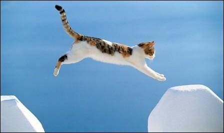 Un chat retombe-il toujours sur ses pattes ?
