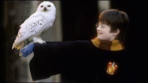"Dans ""Harry Potter, quel animal est Hedwige ?"