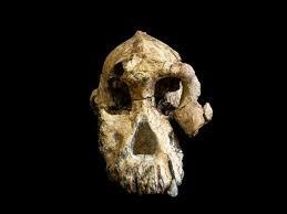 Où a été retrouvé le squelette de Lucy ?