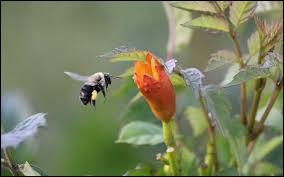 Que signifie le mot biodiversité ?