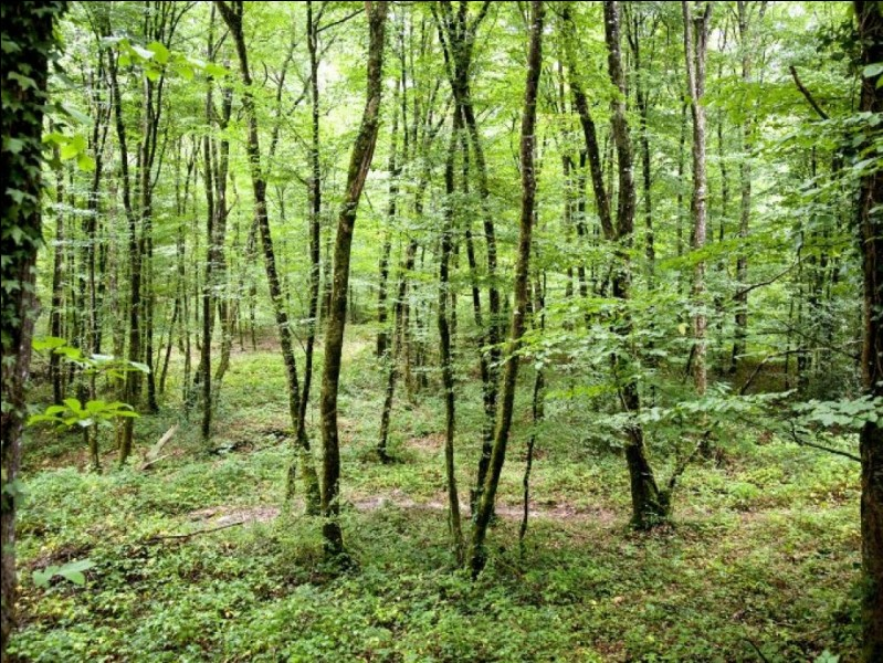 Quelle forêt luxuriante abrite la plus grande biodiversité en son sein ?