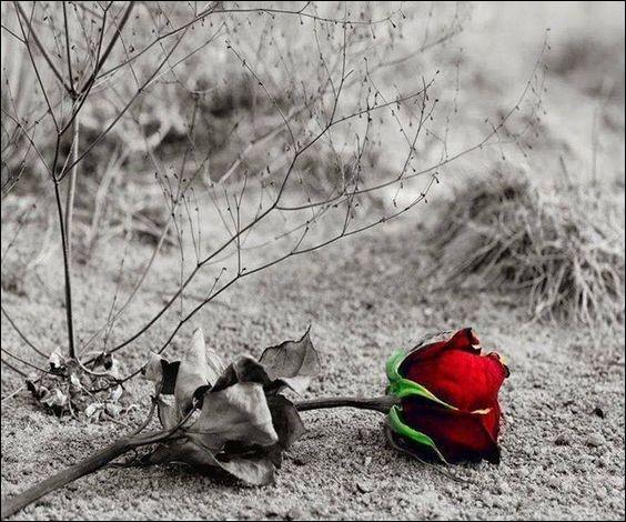 """À qui Cat Stevens rendait-il hommage en jetant une rose dans son cercueil, par les paroles """"I loved you my lady, though in your grave you lie, I'll always be with you, this rose will never die, this rose will never die"""" ?"""