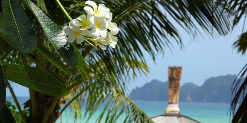 Le monoï est obtenu par macération de fleurs de Tiaré Tahiti dans de l'huile raffinée de coprah.