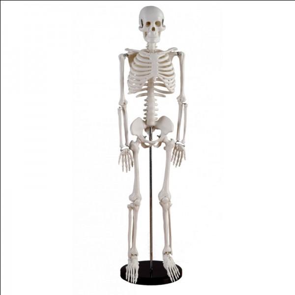 Où se situe l'os du Cubitus ?