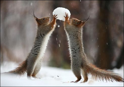 Noël approche, alors ces deux animaux ont décidé de construire un bonhomme de neige !