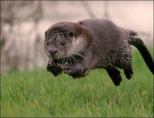Cet animal participe aux JO, il s'est inscrit aux 100 mètres !