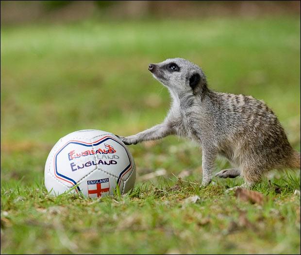 Il a eu le choix entre attaquant et gardien de buts !